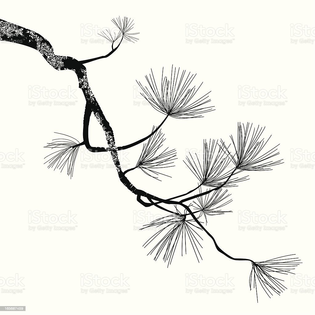 Pine Tree Branch vector art illustration