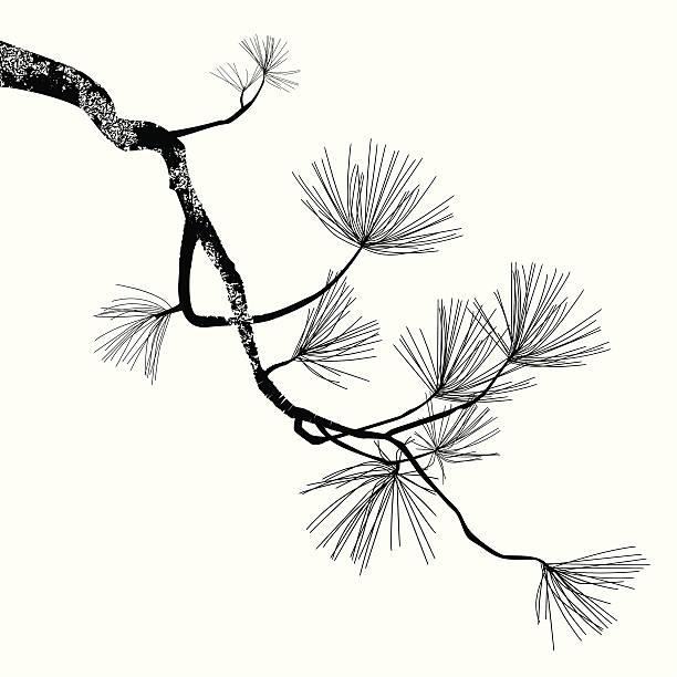 sosna oddziału - gałąź część rośliny stock illustrations