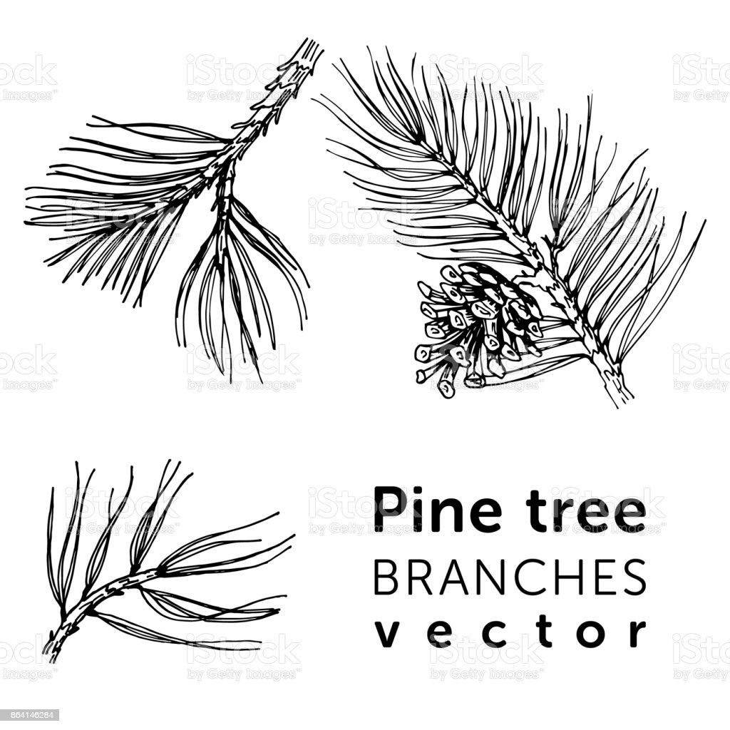 Pine tree branches in simple style for your holidays design. royalty-free pine tree branches in simple style for your holidays design stock vector art & more images of art