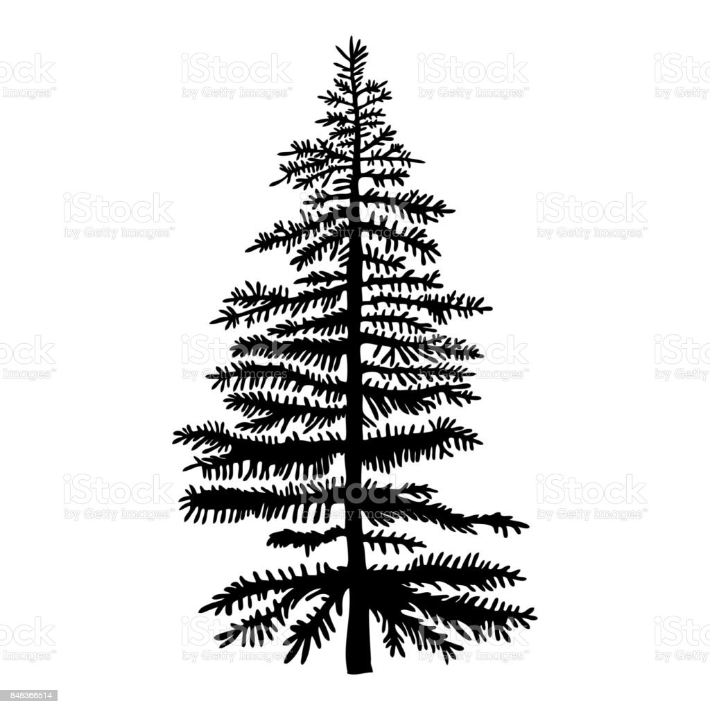 Pine Tree Isolated On White Background Silhouette Woods And Fir Tree
