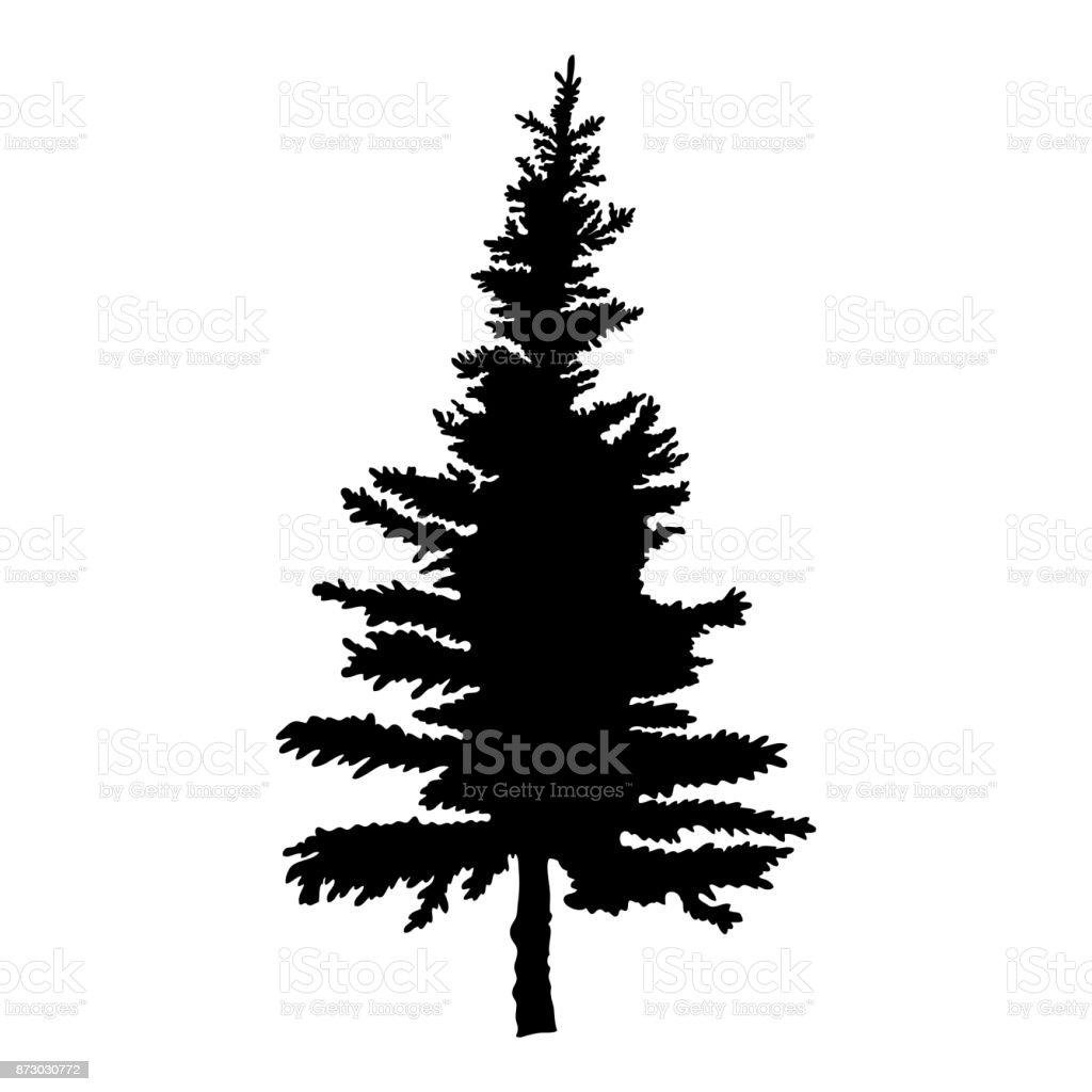 pine tree isolated on white background silhouette woods and fir tree rh istockphoto com pine tree vector free pine tree vector illustration