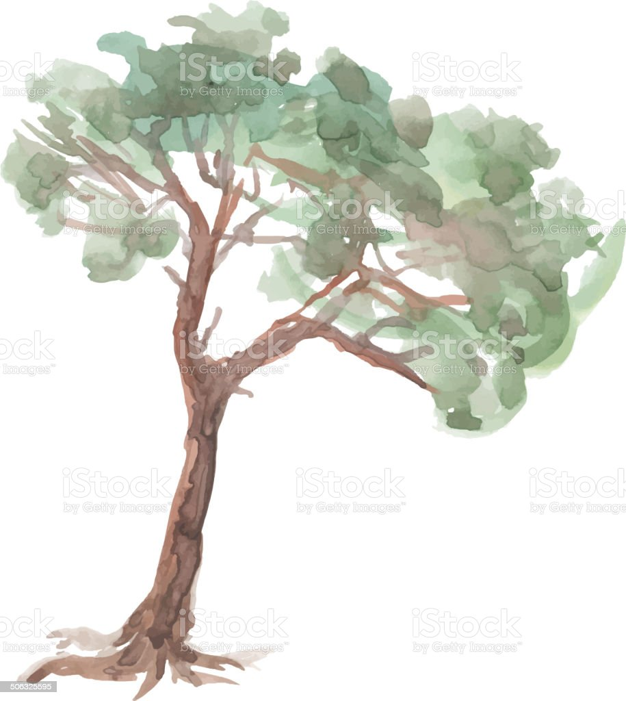 Pine Tree On A White Background Watercolor Sketch Vector Stock ... for Tree Drawing With Watercolor  53kxo
