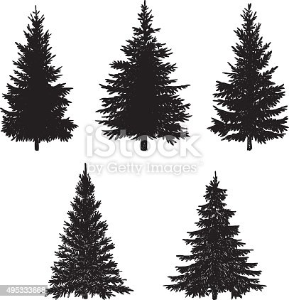 Vector illustration of pine tree.