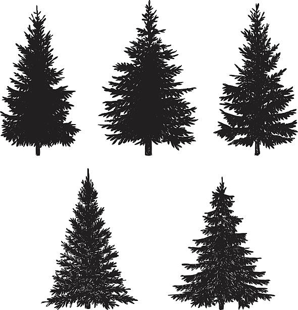 Pine Tree Set Vector illustration of pine tree. pine tree stock illustrations