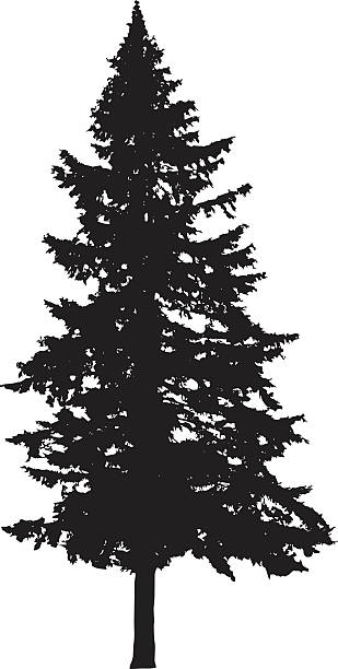 Royalty Free Tall Tree Clip Art, Vector Images ...