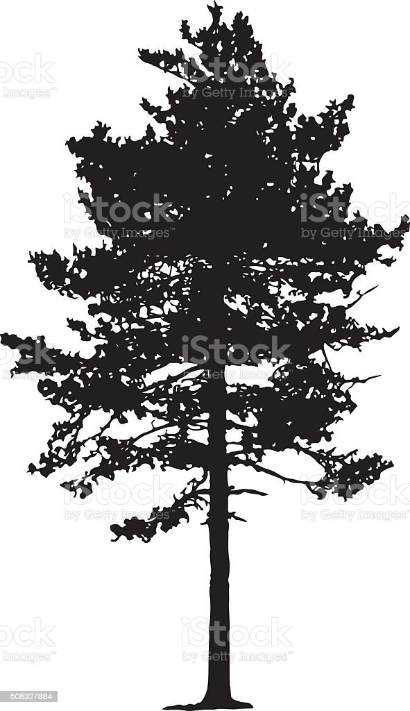 Pine Tree Silhouette vector art illustration