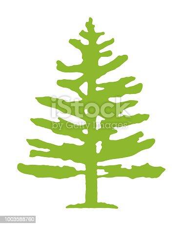 istock Pine Tree 1003588760