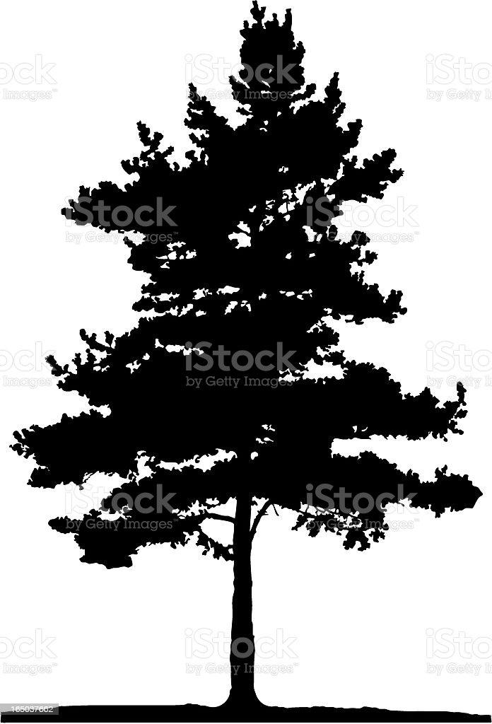 Pine tree, Vector royalty-free stock vector art