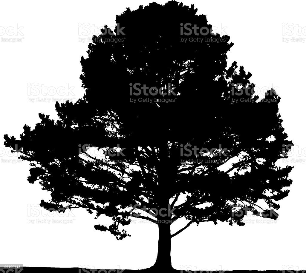 Pine tree, vector royalty-free pine tree vector stock vector art & more images of black and white