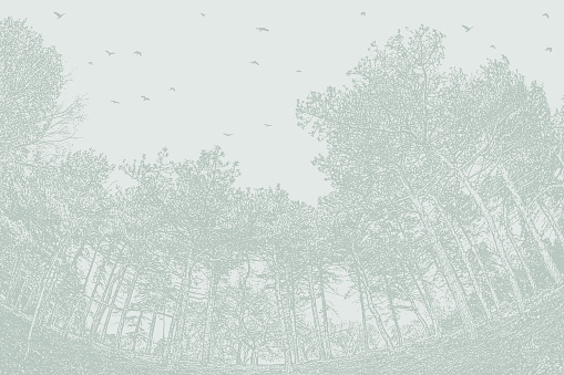 Pine trees and flock of birds