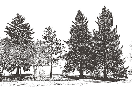 Engraving vector of a row of trees including pine trees