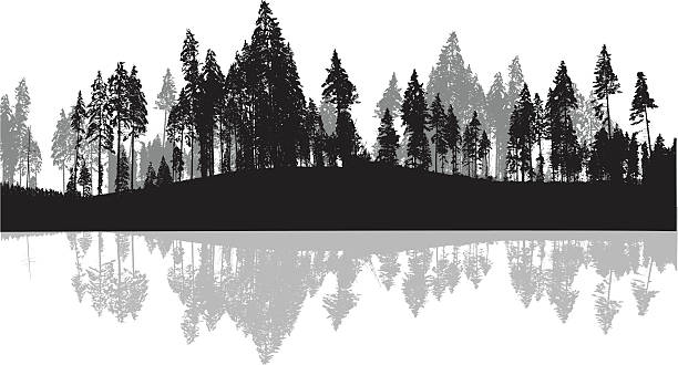 Pine Trees Silhouette Background A vector silhouette illustration of a forest of pine trees reflected in a body of water. treelined stock illustrations