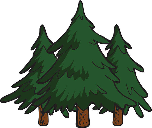 Pine Trees Vector Art Illustration