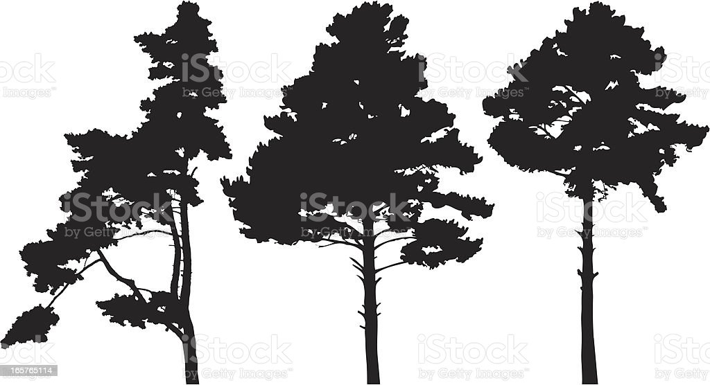 Pine trees royalty-free pine trees stock vector art & more images of backgrounds