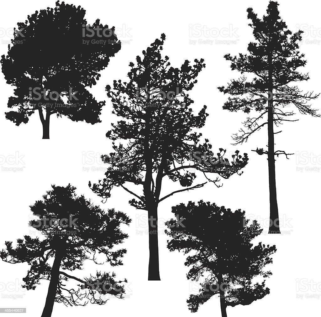 Pine trees, Vector vector art illustration
