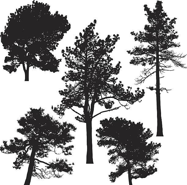 Vector Illustration Tree: Pine Tree Clip Art, Vector Images & Illustrations