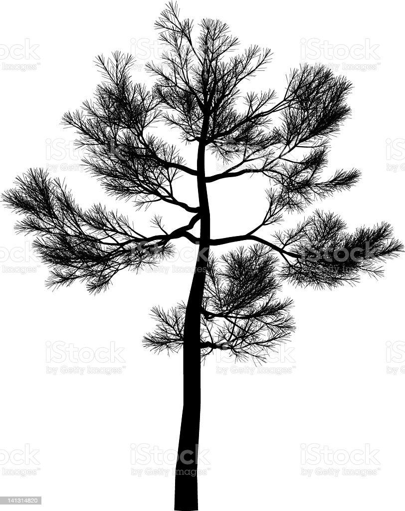 pine royalty-free stock vector art