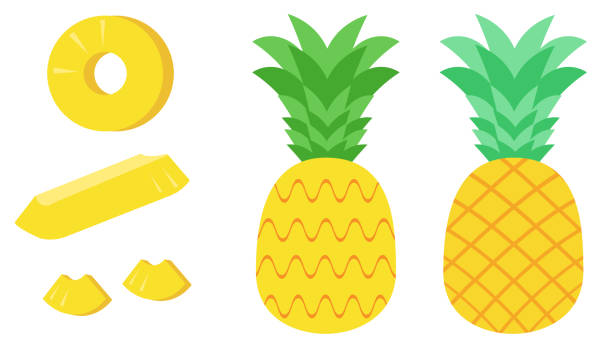 Pineapple and various cut material illustrations vector art illustration