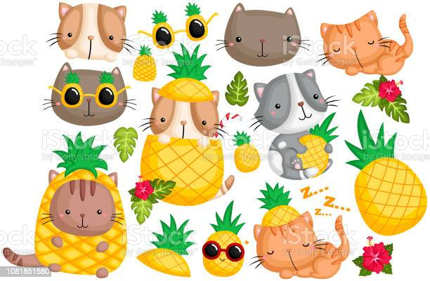 Pineapple cat vector set vector id1081851580?b=1&k=6&m=1081851580&s=612x612&h=33ikpsoqfixhamvcrr3 kghshf3hy6pzpxzr6hlhja0=