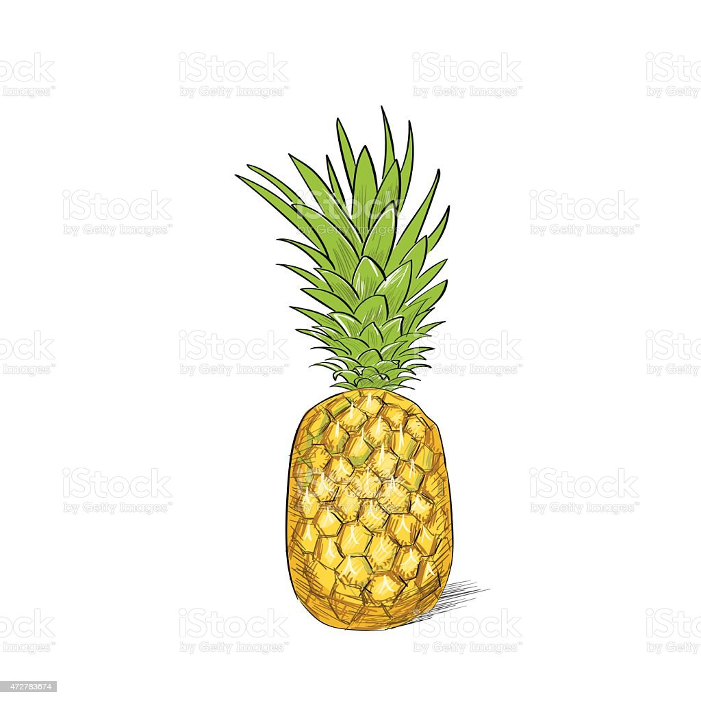 Pineapple Fruit Color Sketch Draw Isolated Over White Background ...
