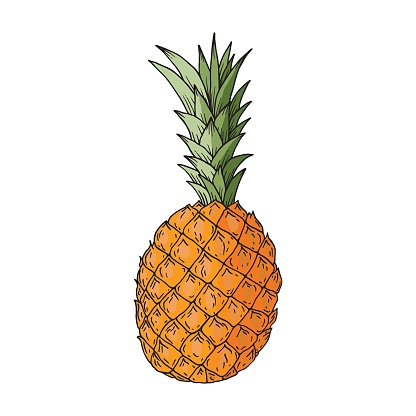 Pineapple fruit. Hand-drawn colored vector illustration. Isolated on a white background.