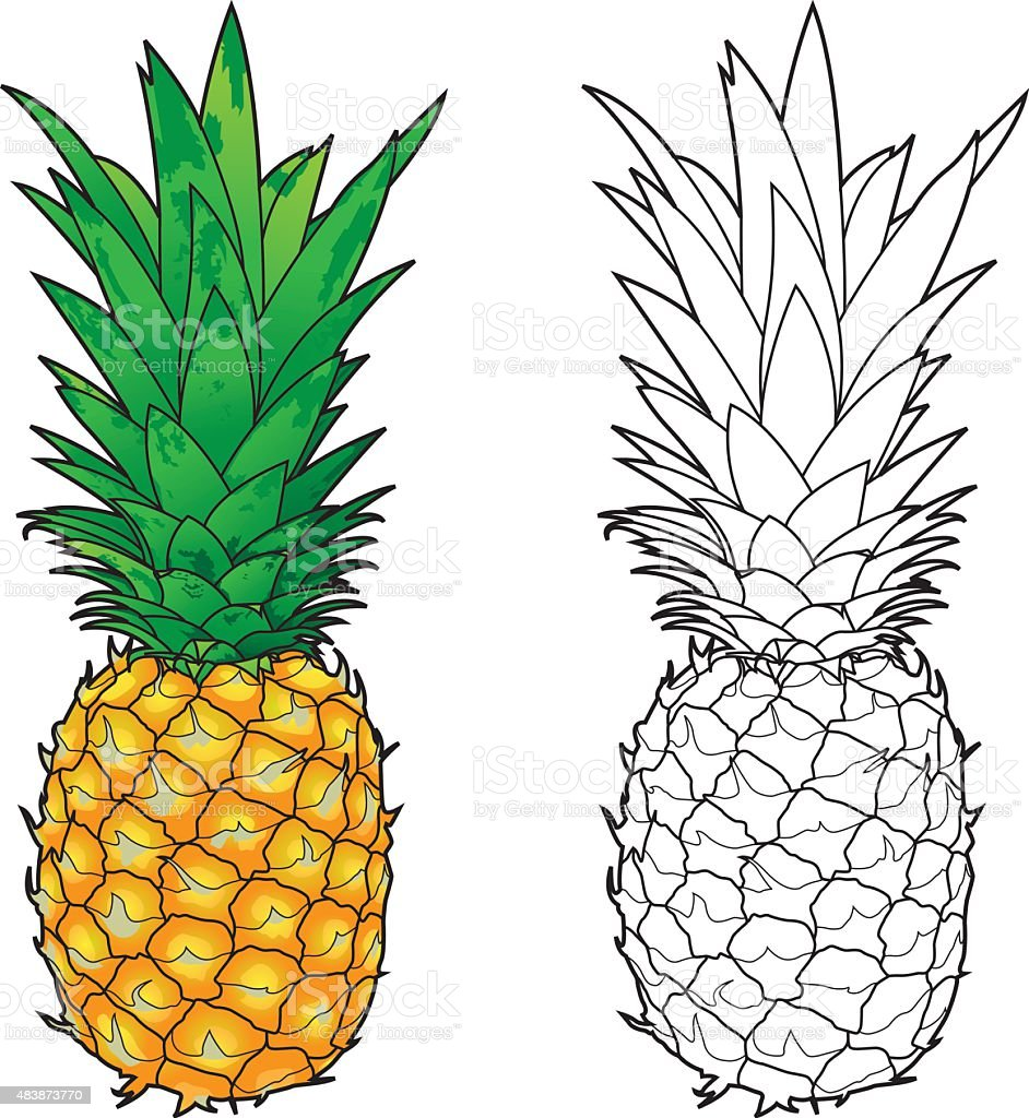 Line Art Vector Photo : Pineapple line art color stock vector more images of