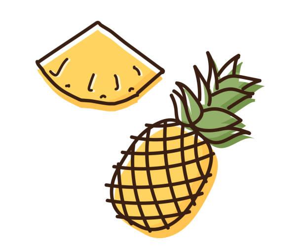 illustrazioni stock, clip art, cartoni animati e icone di tendenza di pineapple outline illustration with watercolor effect. vector doodle sketch hand drawn illustration - ananas