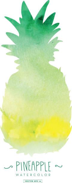 illustrazioni stock, clip art, cartoni animati e icone di tendenza di pineapple silhouette with watercolor abstract texture - ananas