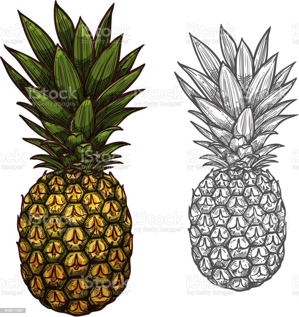 Fruits Tropicaux Ananas Dessin Pour La Conception De