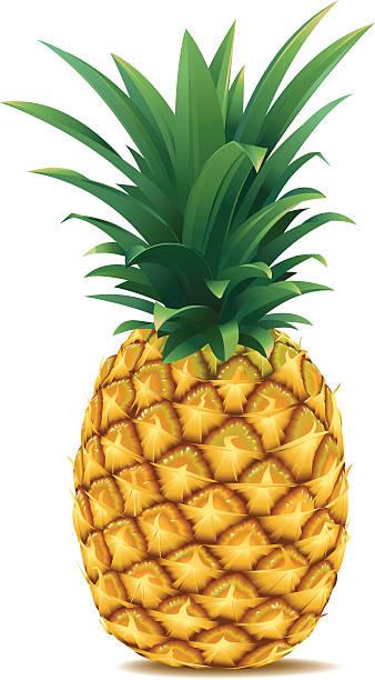 illustrazioni stock, clip art, cartoni animati e icone di tendenza di ananas - ananas