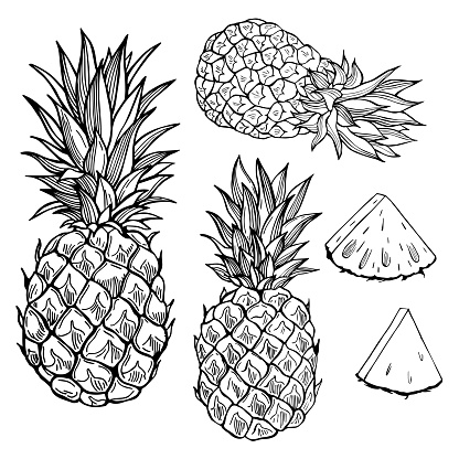 Pineapple. Vector sketch  illustration.