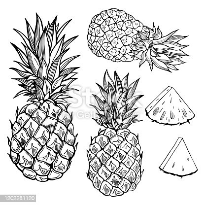 Hand drawn fruits on white background. Pineapple. Vector sketch  illustration.