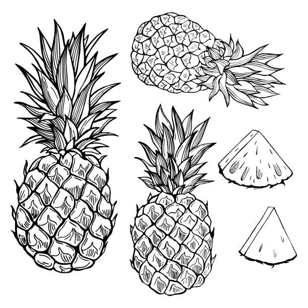 bildbanksillustrationer, clip art samt tecknat material och ikoner med ananas. vektor skiss illustration. - vegetarian