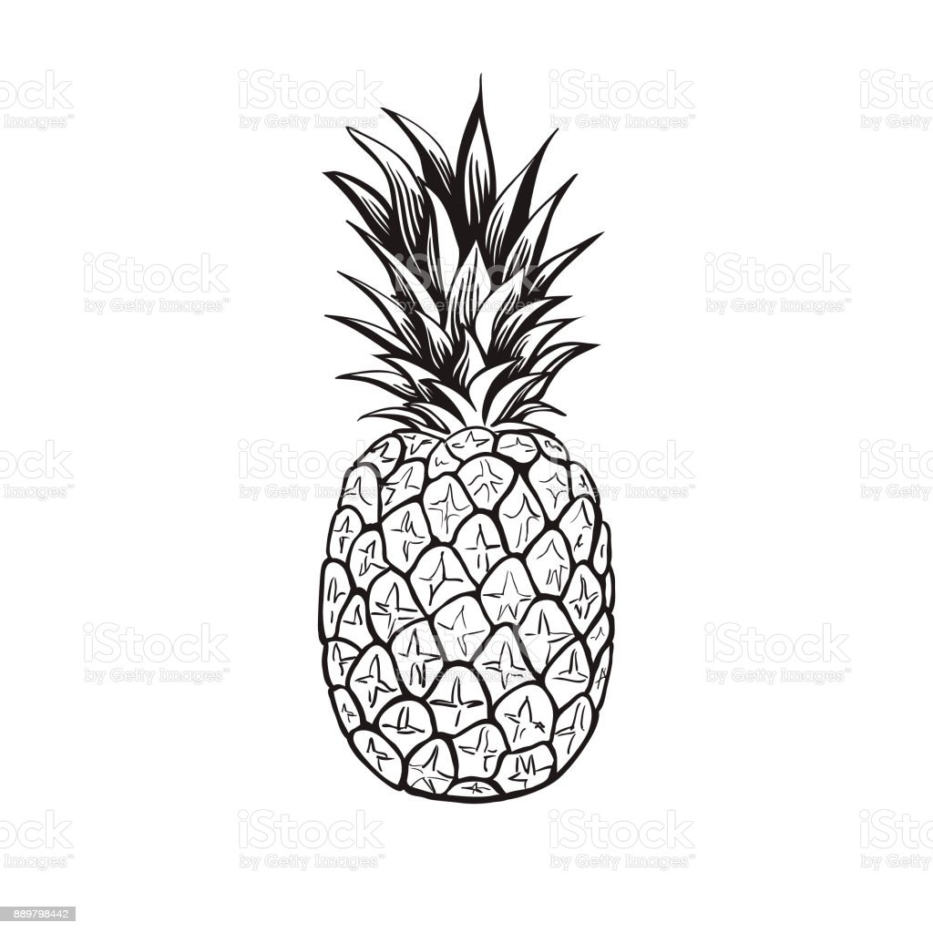 Pineapple - Vector vector art illustration