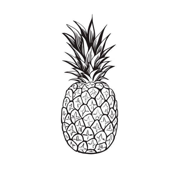 illustrazioni stock, clip art, cartoni animati e icone di tendenza di pineapple - vector - ananas