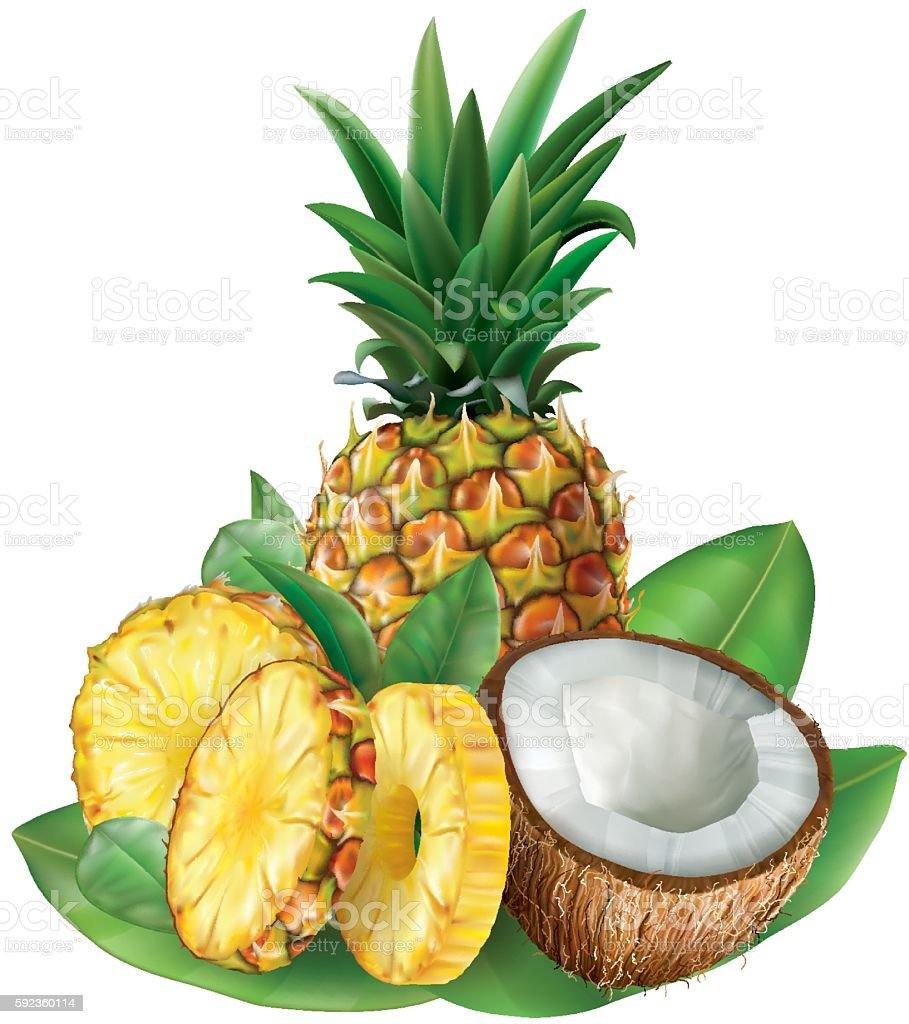 Pineapples and cut coconut vector art illustration