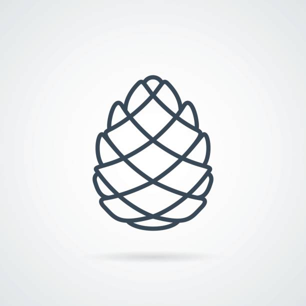 Pinecone Line Icon Vector Pinecone Line Icon Vector illustration. Pine cone botanical logo isolated on background with a shadow. label cone Easy to use template pine tree stock illustrations