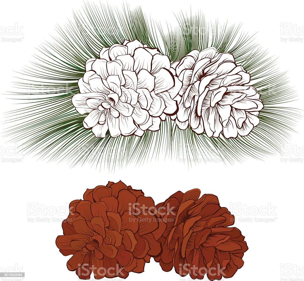 Pinecone Vector illustration isolated pinecone vector illustration isolated – cliparts vectoriels et plus d'images de aiguille - partie d'une plante libre de droits