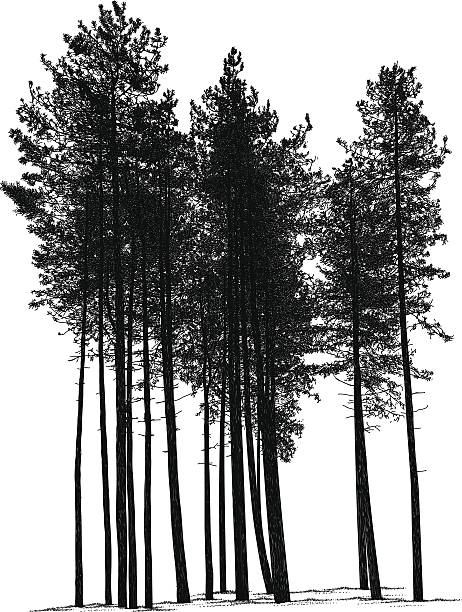 Royalty Free Pine Tree Clip Art, Vector Images ...