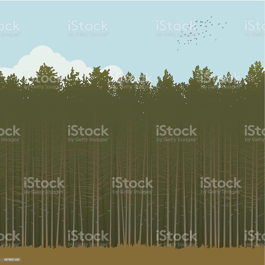 Pinewood vector art illustration