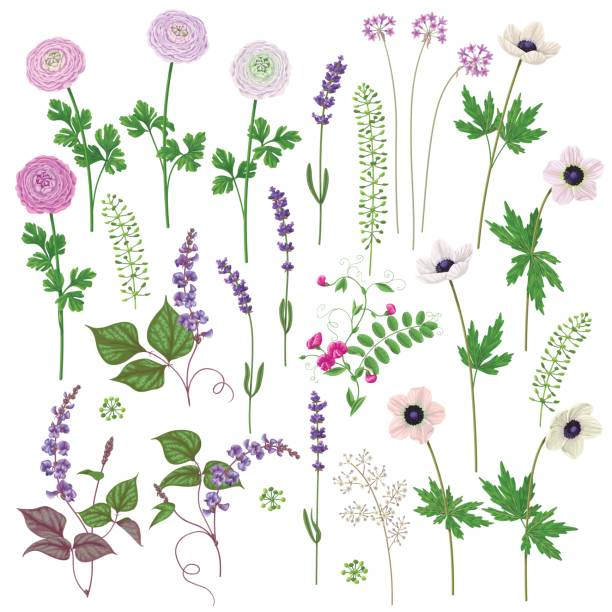 pink and lilac flowers set - wildflowers stock illustrations, clip art, cartoons, & icons