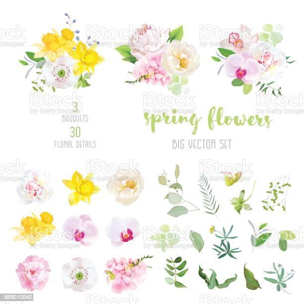 Pink and white peony yellow daffodils wild rose white poppy vector id669010040?b=1&k=6&m=669010040&s=612x612&h=5yh3dlyjdmke4nb6 admvn5x8bqnzyc4k7h5ycmnbtc=