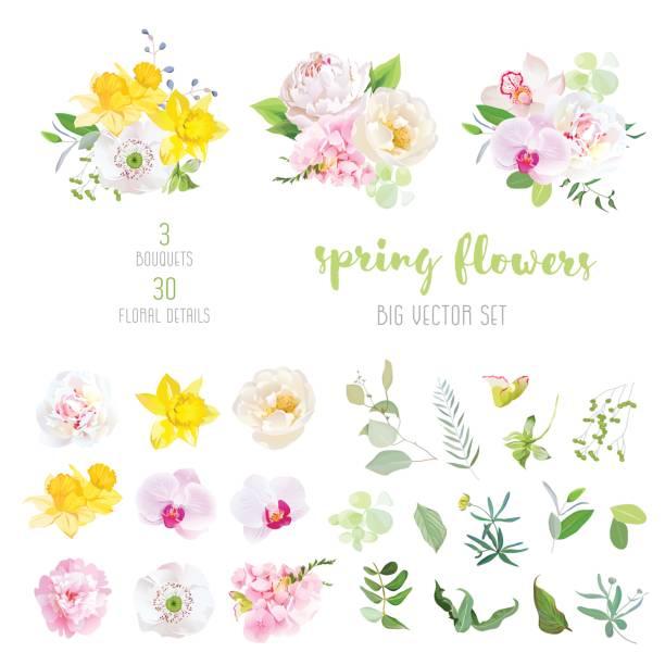 rosa und weiße pfingstrose, gelbe narzissen, wildrose, weißen mohn, - narzissen stock-grafiken, -clipart, -cartoons und -symbole