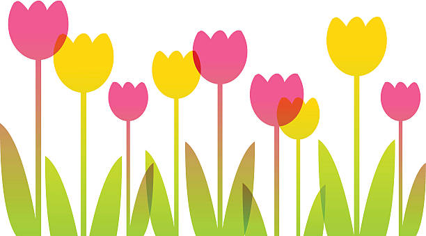 Royalty Free Tulip Clip Art, Vector Images & Illustrations ...