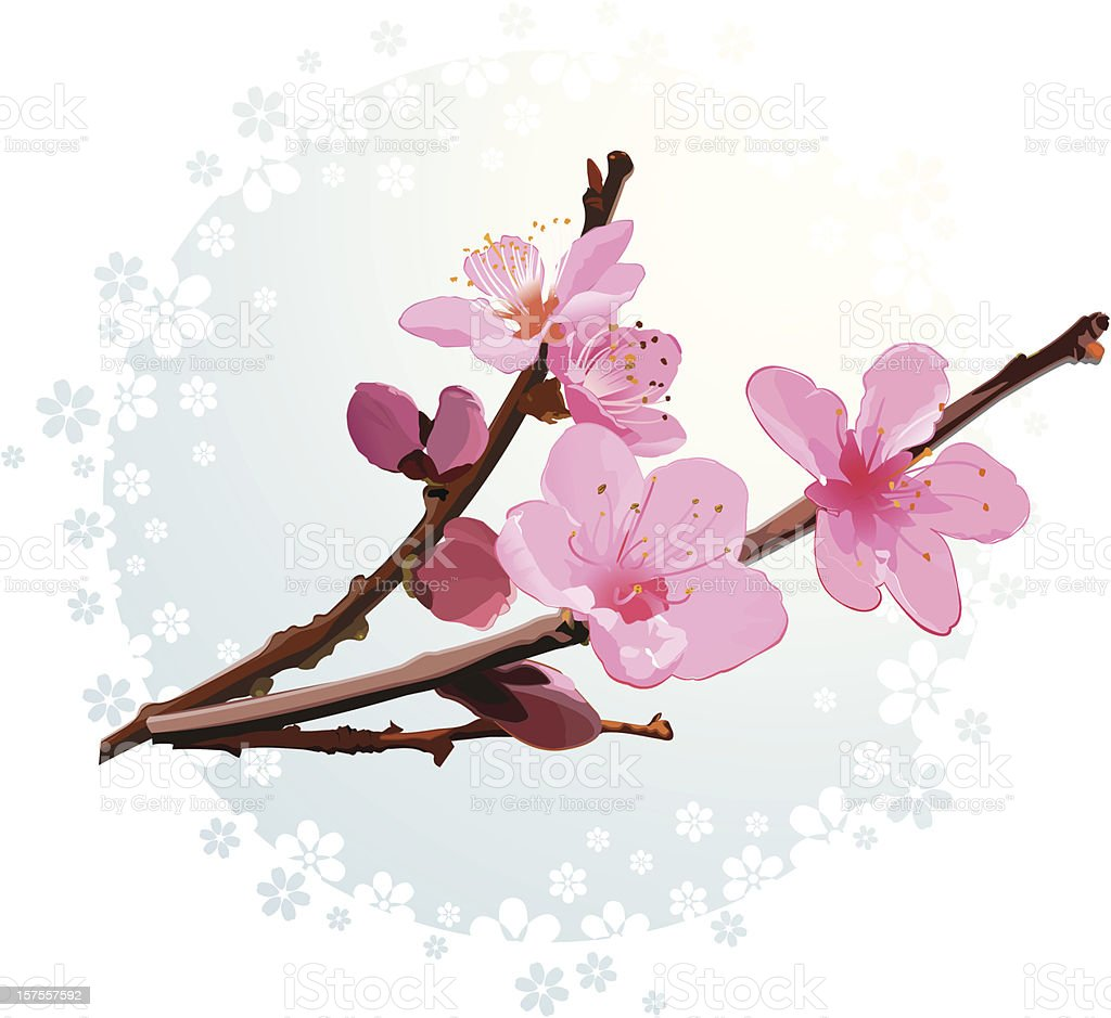 Pink apricot  blossom vector art illustration