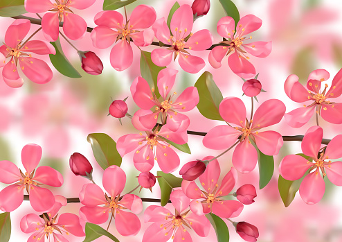 Pink blossoming cherry branches with bokeh effect background
