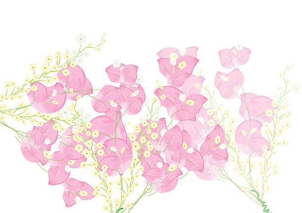 Buganvilia rosa flores por objeto o en el fondo - ilustración de arte vectorial