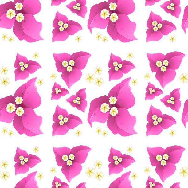 Flores de buganvillas de color rosa sobre fondo transparente - ilustración de arte vectorial