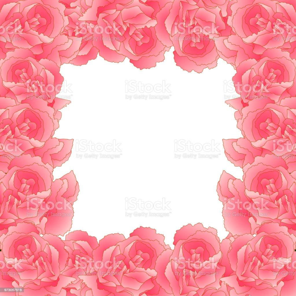 Pink Carnation Flower Border, Dianthus caryophyllus vector art illustration