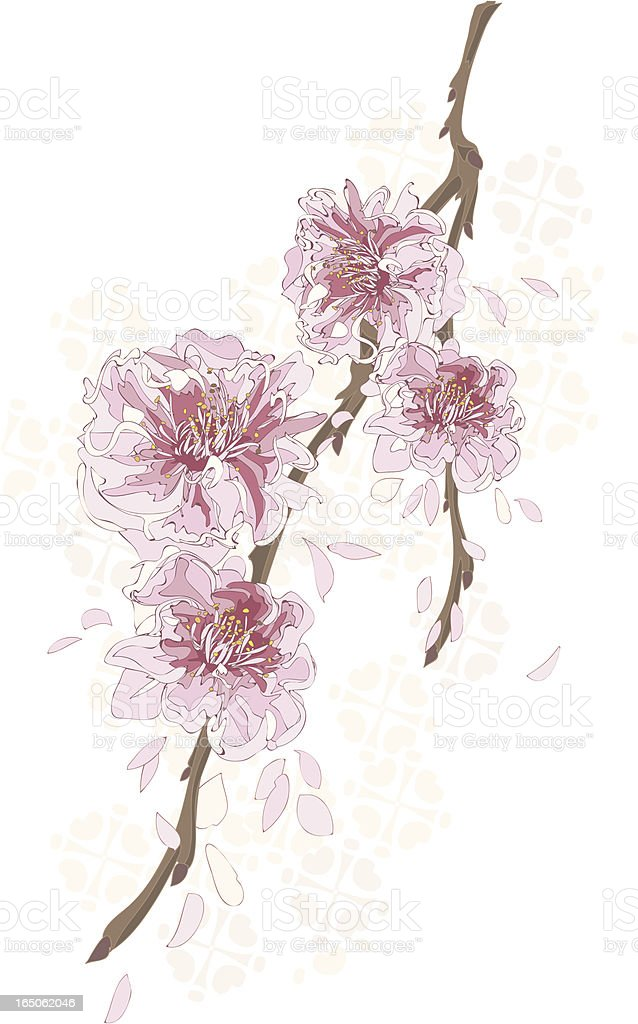 pink cherry blossom flowers illustration royalty-free stock vector art